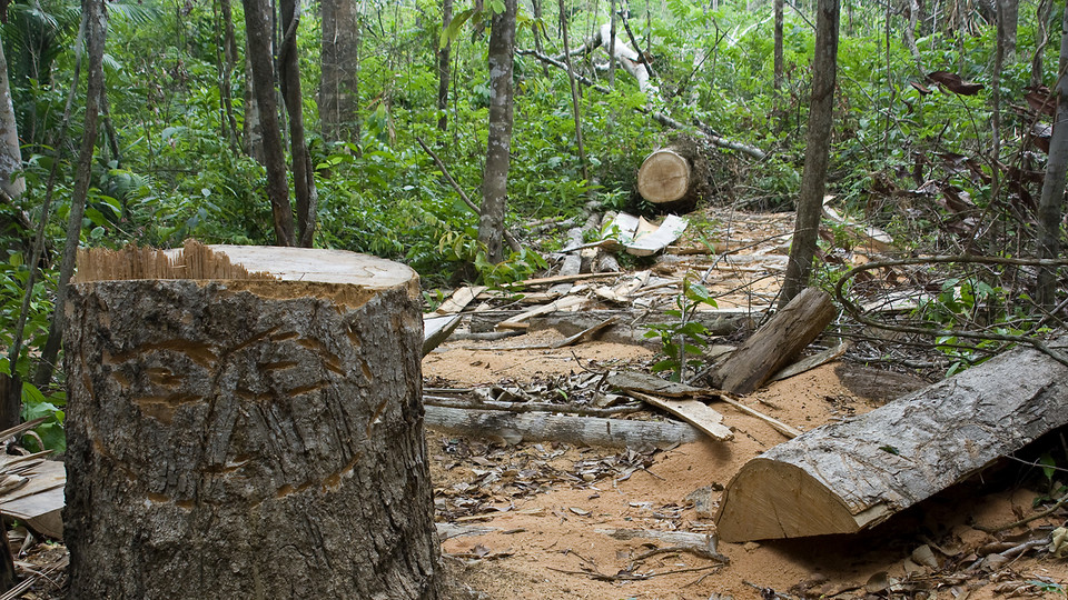 cause and effect of cutting trees